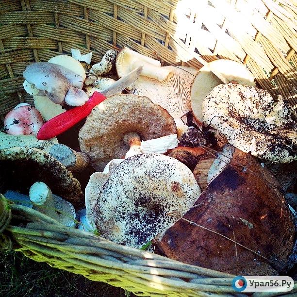 грибы оренбургской области фото и названия в августе