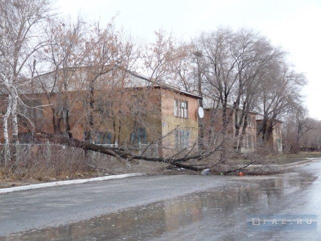 Черняховск погода на 7 дней