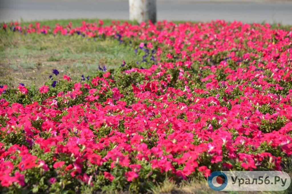 Цветники и газоны на площади Шевченко Орска в этом году обойдутся бюджету более чем в 400 тыс рублей