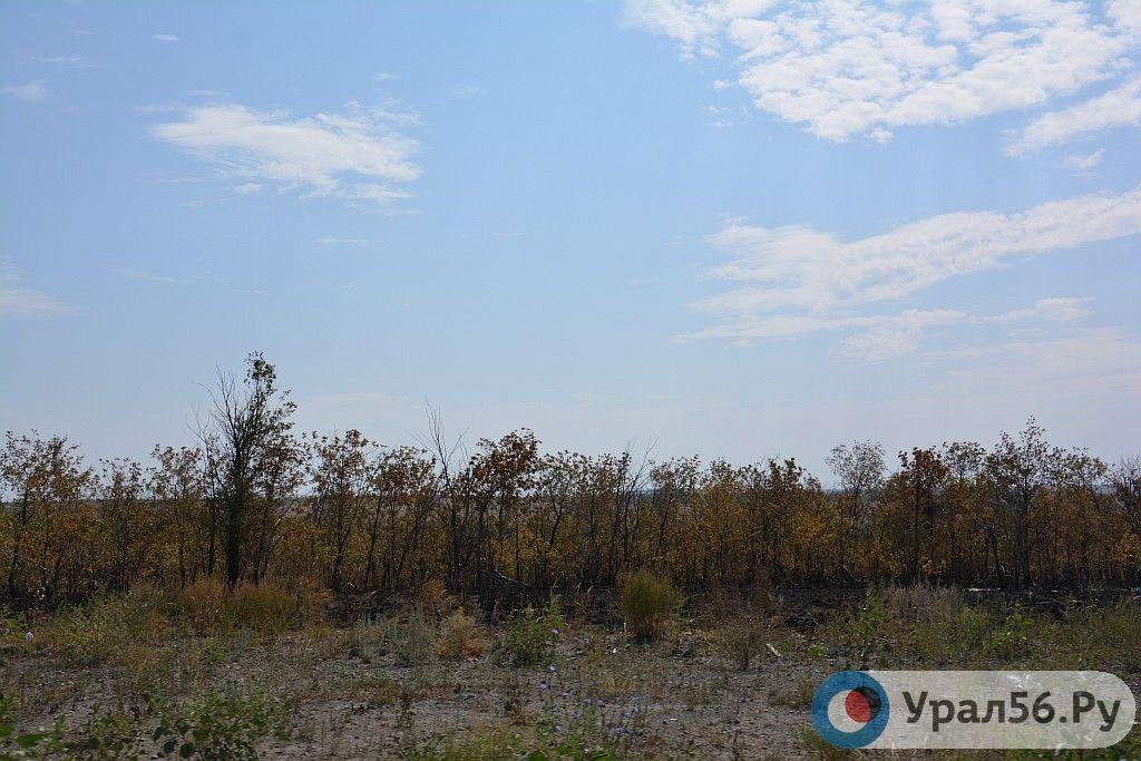 На восстановление лесополосы вдоль трассы в Сакмарском районе готовы потратить почти 2 млн рублей