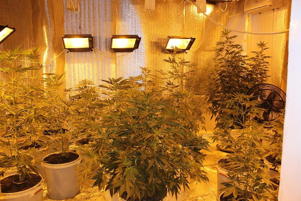 Что нужно для марихуаны конопля химическим способом